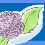 梅雨の彩りに…紫陽花イラストの描き方