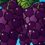 紫の粒々!!ぶどうの描き方