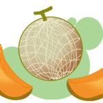 ちょっと豪華な果物?メロンの簡単な描き方